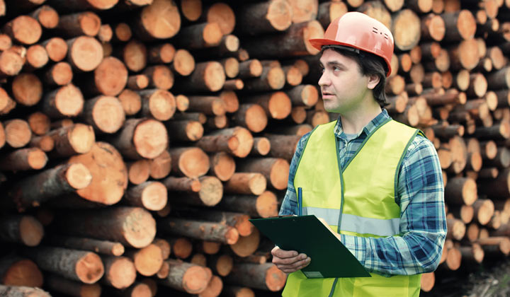 lumber mill inspector by logpile